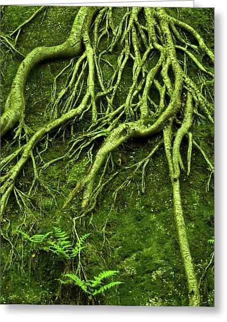 Tree Roots Photographs Greeting Cards - Green Growth Greeting Card by Shannon Workman