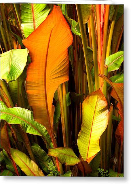 Stephen Mack Greeting Cards - Green House Palms at Fairchild Greeting Card by Stephen Mack
