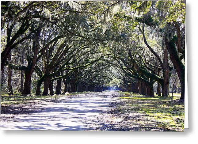 The South Photographs Greeting Cards - Green Lane Greeting Card by Carol Groenen