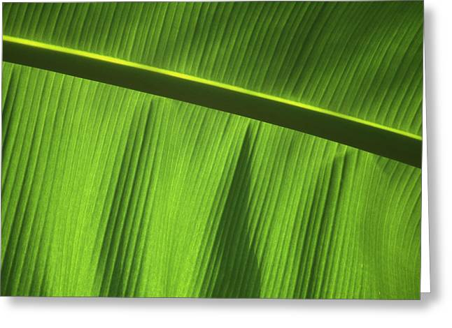 Green Day Greeting Cards - Green Leaf, Close-up Greeting Card by Axiom Photographic