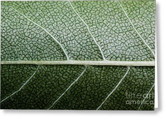 Kelly Greeting Cards - Green Leaf Geometry Greeting Card by Ryan Kelly