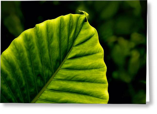 Lyle Huisken Greeting Cards - Green Leaf Greeting Card by Lyle  Huisken