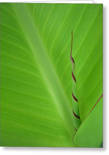 Green Leaf With Spiral New Growth Greeting Card by Nikki Marie Smith
