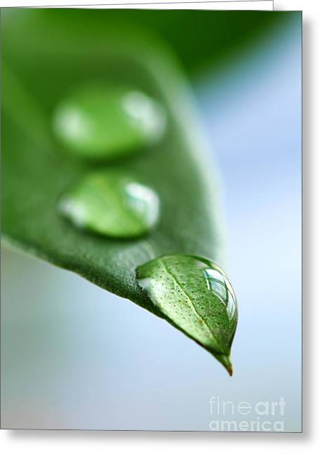 Organic Photographs Greeting Cards - Green leaf with water drops Greeting Card by Elena Elisseeva