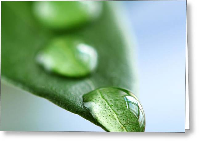 Green leaf with water drops Greeting Card by Elena Elisseeva