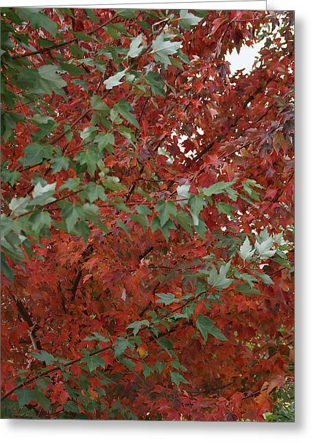 Counterpoint Greeting Cards - Green Leaves Against Red Leaves Greeting Card by Mick Anderson