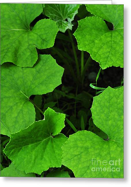 Self Confidence Greeting Cards - Green Leaves Greeting Card by Thomas R Fletcher