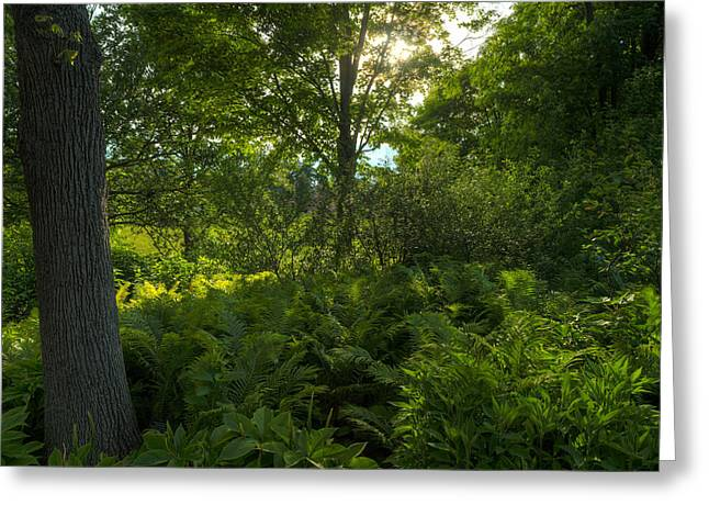 Chicago Botanic Garden Greeting Cards - Green Light Greeting Card by Steve Gadomski