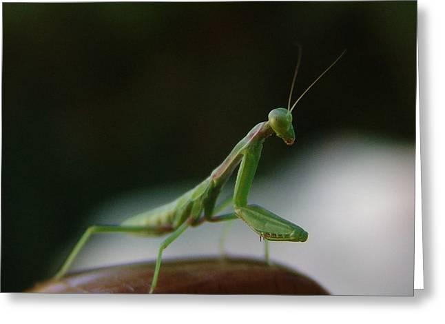 Mantises Greeting Cards - Green Mantis Greeting Card by Alessandro Della Pietra