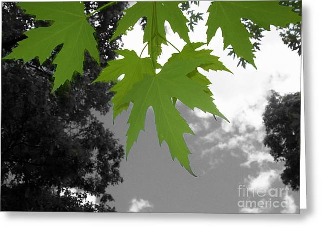 Green Maple Leaves Greeting Card by Mary Mikawoz