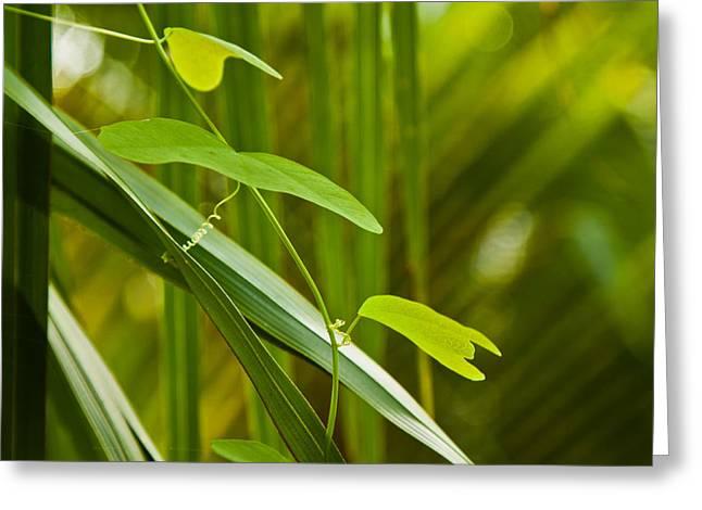 """jungle Vines"" Greeting Cards - Green Greeting Card by Meggan Trobaugh"