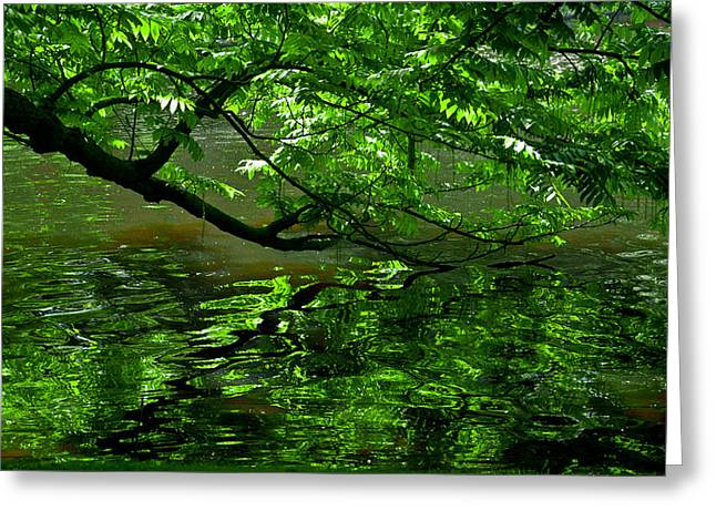 Alberi Greeting Cards - Green  Greeting Card by Michele Mule