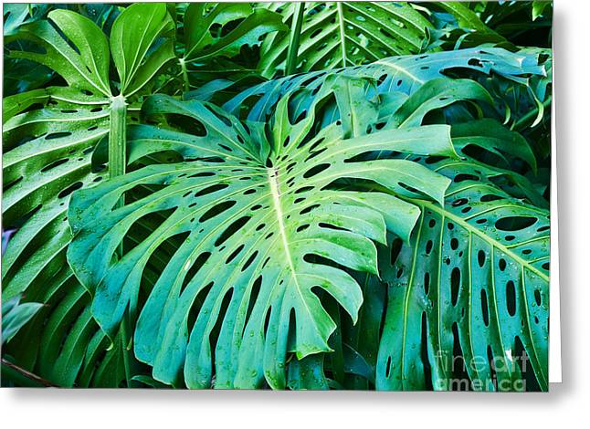 Green Foliage Greeting Cards - Green Monster  Greeting Card by Jim Chamberlain