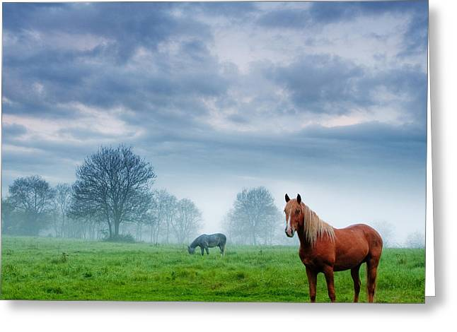 Green Morn Greeting Card by Evgeni Dinev