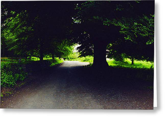 Dark Hedges Greeting Cards - Green Oak with Purple Greeting Card by Jan Faul