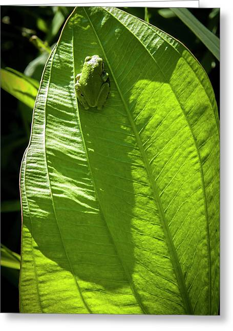 Wapato Photographs Greeting Cards - Green on Green Greeting Card by Albert Seger