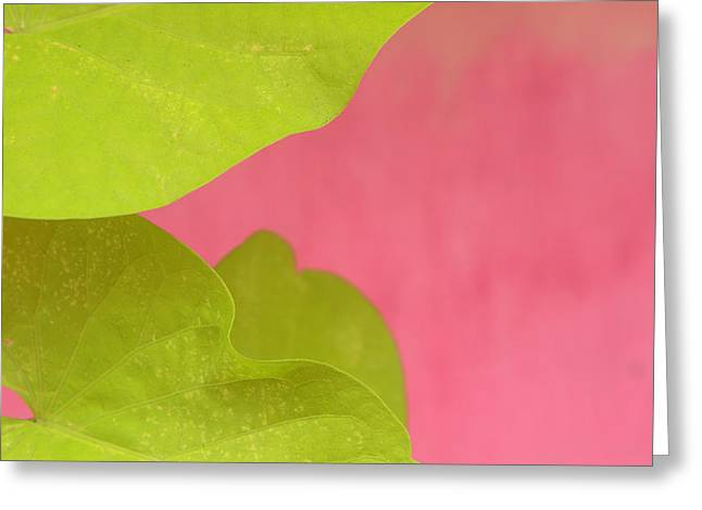 Art Ferrier Greeting Cards - Green on Pink 1 Greeting Card by Art Ferrier