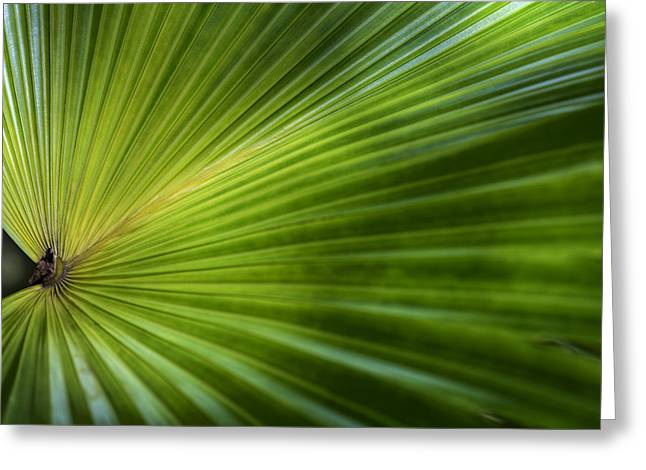 Green palm Greeting Card by Al Hurley