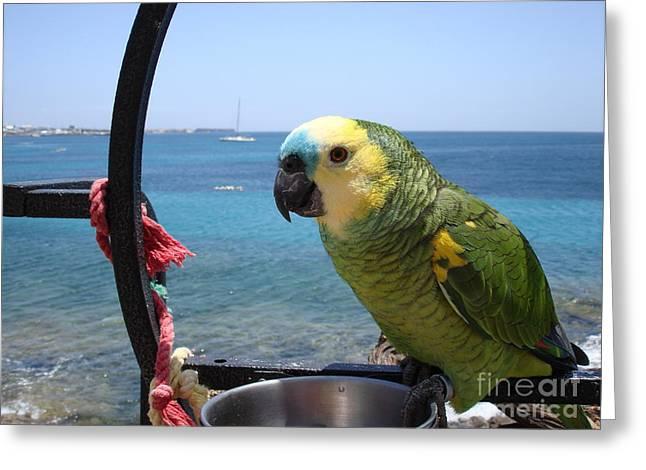 Playa Blanca Greeting Cards - Green Parrot Greeting Card by John Chatterley