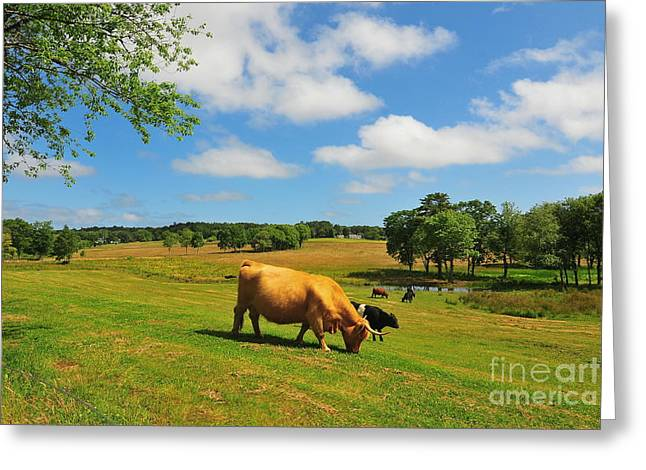 Plymouth Massachusetts Greeting Cards - Green Pasture Greeting Card by Catherine Reusch  Daley