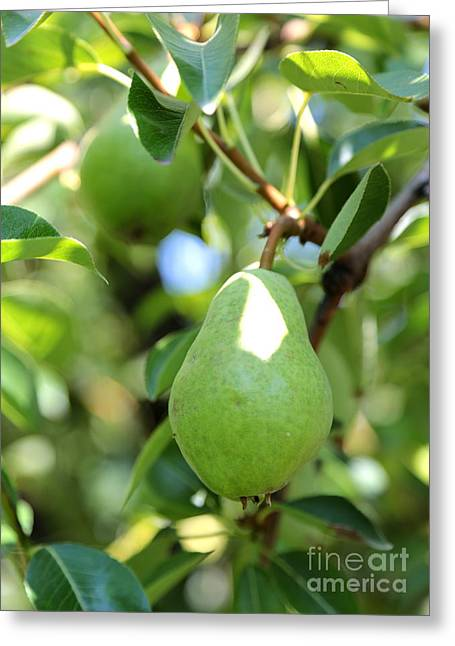 Fruit Tree Photographs Greeting Cards - Green Pear Greeting Card by Carol Groenen