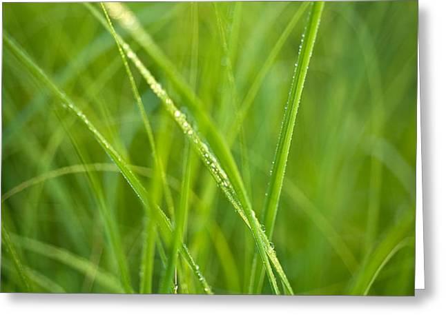 Green Prairie Grass Greeting Card by Steve Gadomski