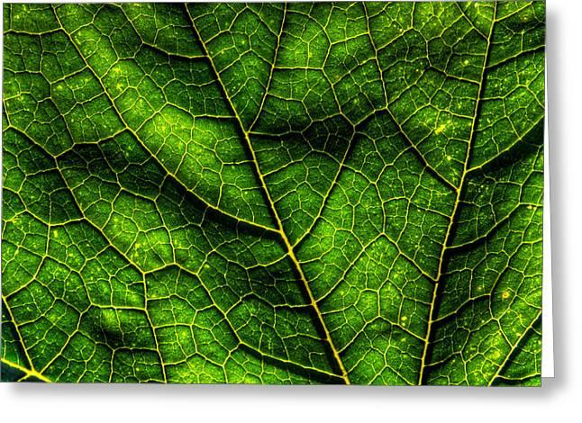Green Pumpkin Leaf Greeting Card by Matt Dobson