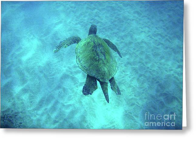 Snorkeling Photos Greeting Cards - Green Sea Turtle 2 Greeting Card by Bob Christopher