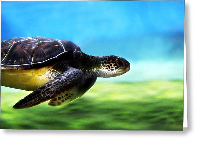 Snorkeling Greeting Cards - Green Sea Turtle 2 Greeting Card by Marilyn Hunt