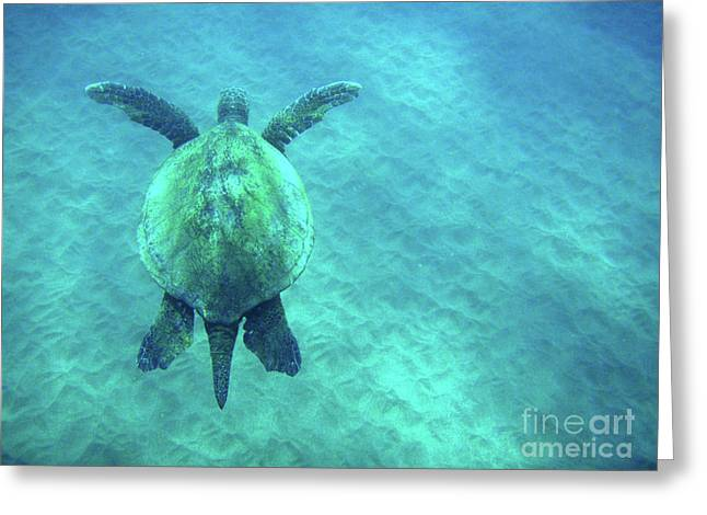 Snorkeling Photos Greeting Cards - Green Sea Turtle 3 Greeting Card by Bob Christopher