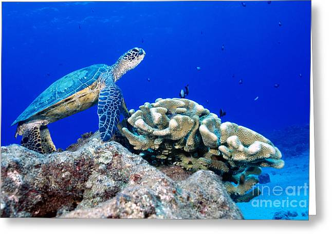 Green Sea Turtle Greeting Card by Andrew G Wood and Photo Researchers