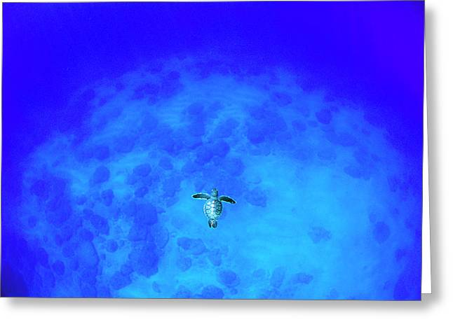 Earth Alone Greeting Cards - Green Sea Turtle Chelonia Mydas Baby Greeting Card by Yusuke Yoshino