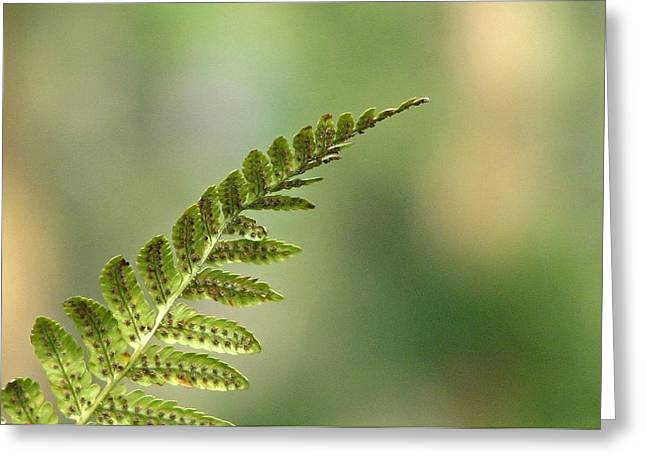 Mistymisschristie Greeting Cards - Green Simplicity Greeting Card by Chris Anderson