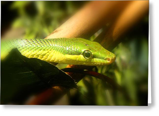 Green Snake Greeting Card by Roberto Alamino