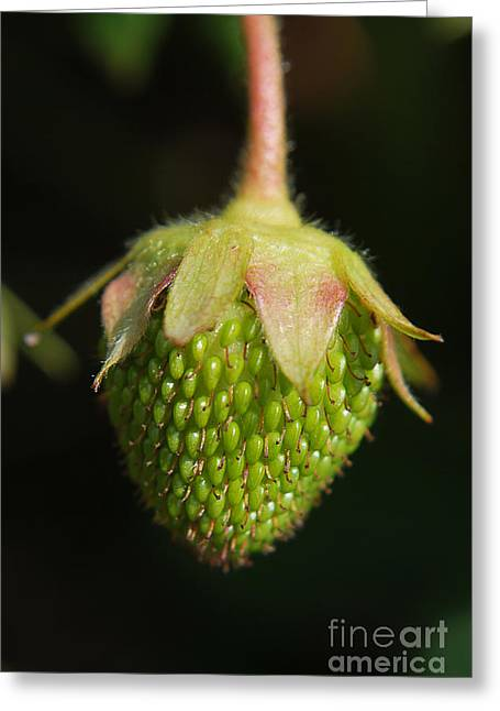 Strawberry Art Greeting Cards - Green Strawberry Greeting Card by Yhun Suarez