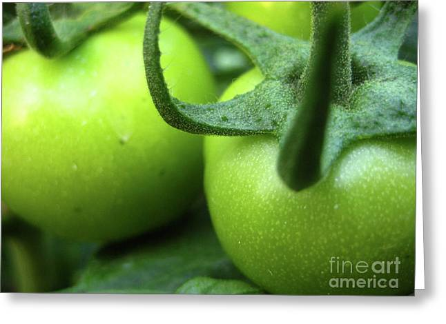 Hdr Photo Greeting Cards - Green Tomatoes No.3 Greeting Card by Kamil Swiatek