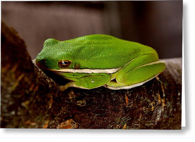Tree Frog Greeting Cards - Green Tree Frog Greeting Card by James Granberry
