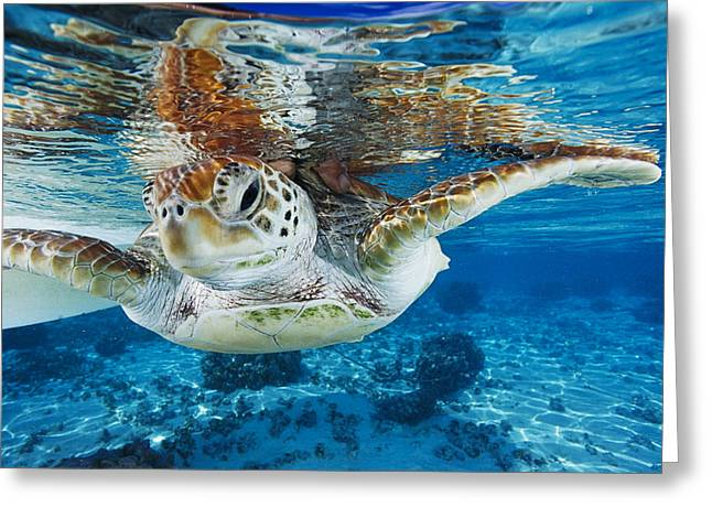 Marine Green Greeting Cards - Green Turtle Greeting Card by Alexis Rosenfeld