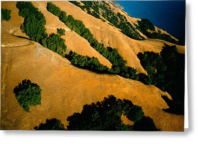 Santa Lucia Mountains Greeting Cards - Greenery Takes Hold In Crevasses Greeting Card by Frans Lanting