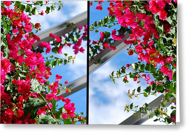 Chicago Botanic Garden Greeting Cards - Greenhouse View Diptych Greeting Card by Nancy Mueller