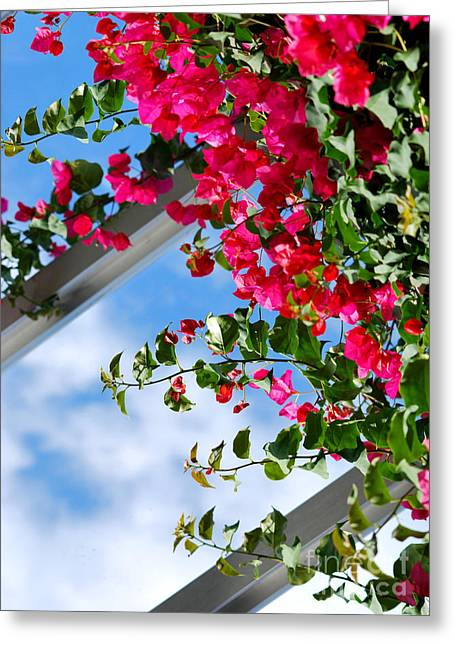 Chicago Botanic Garden Greeting Cards - Greenhouse View I Greeting Card by Nancy Mueller