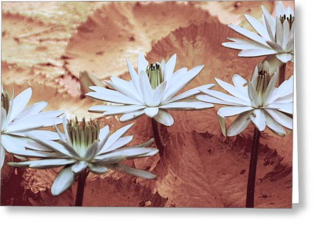 Lotus Pond Greeting Cards - Greeting the Day Greeting Card by Holly Kempe
