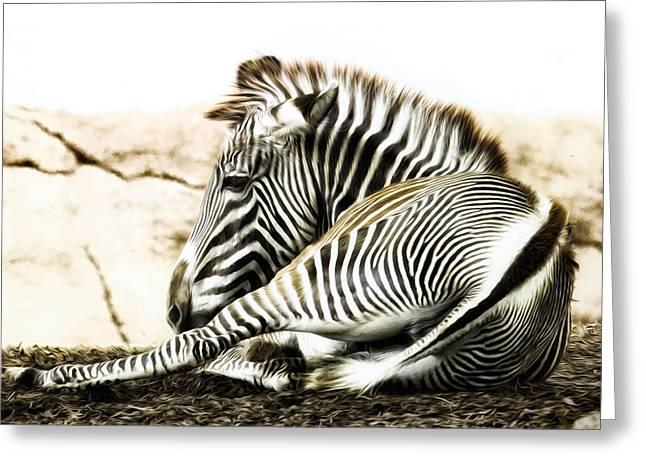 Grevy's Zebra Greeting Card by Bill Tiepelman