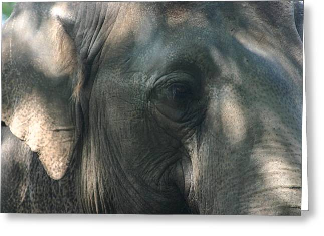 Elephant Pyrography Greeting Cards - Grey 2 Greeting Card by Stephanie Hopkins