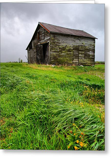 Barn Storm Greeting Cards - Grey County Barn Greeting Card by Cale Best