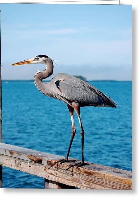 Grey Heron Greeting Cards - Grey Heron Greeting Card by Robert Meanor
