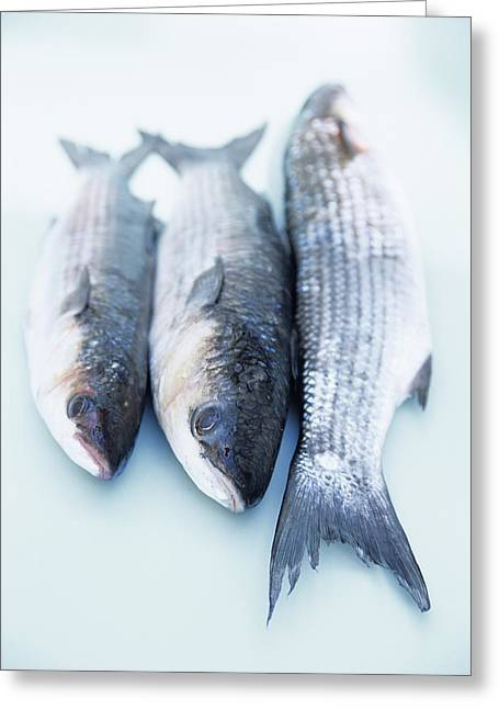 Grey Mullet Greeting Card by Veronique Leplat