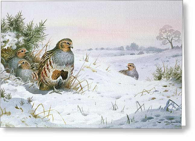 Wildfowl Greeting Cards - Grey Partridge Greeting Card by Carl Donner