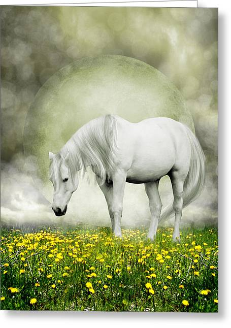 Dejected Greeting Cards - Grey Pony in Field of Buttercups Greeting Card by Ethiriel  Photography