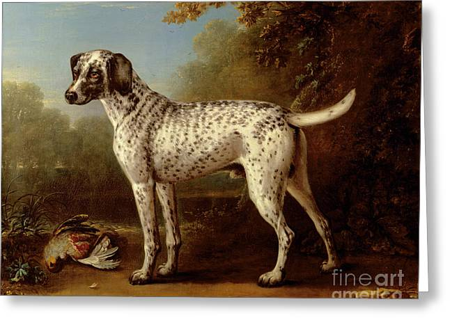 Hunting Bird Greeting Cards - Grey spotted hound Greeting Card by John Wootton